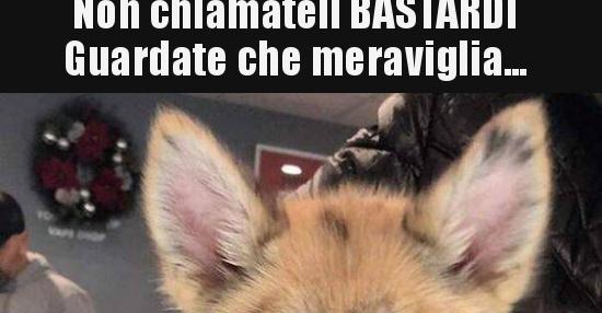 besti.it