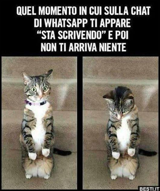 Immagini divertenti foto barzellette video for Immagini per whatsapp free