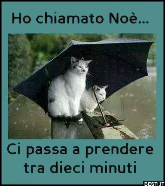 frasi divertenti quando piove