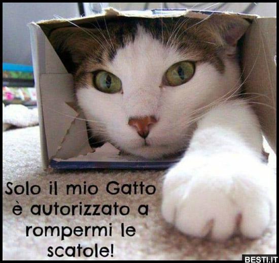 Solo il mio Gatto | BESTI.it - immagini divertenti, foto, barzellette, video
