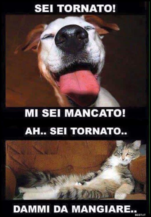 Vignette Divertenti Sui Cani E Gatti