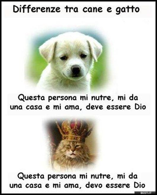 Differenze Tra Cane E Gatto Bestiit Immagini Divertenti Foto
