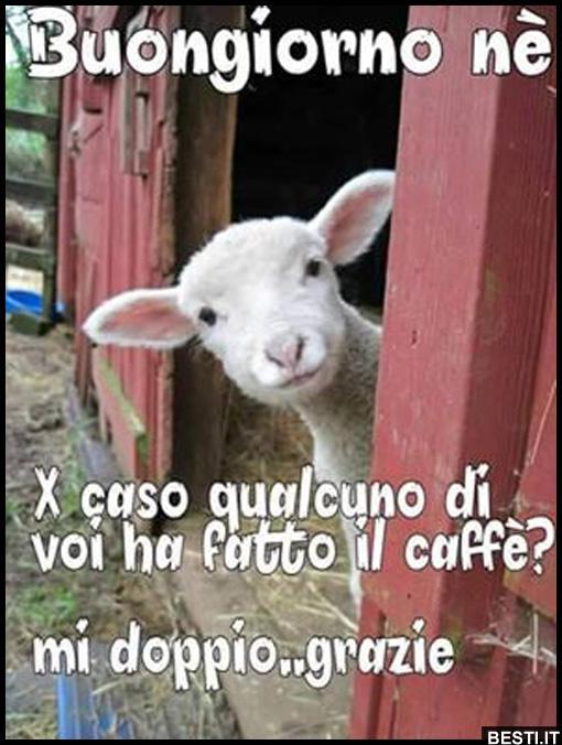 Buongiorno immagini divertenti foto for Immagini buongiorno gratis divertenti