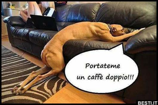 Super un caffè doppio | BESTI.it - immagini divertenti, foto GX-65