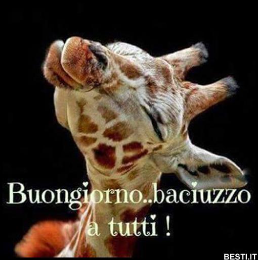 Immagini buongiorno immagini divertenti foto for Immagini buongiorno divertentissime
