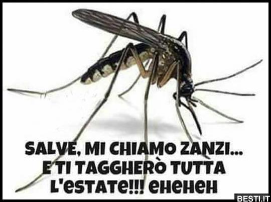 frasi divertenti zanzare