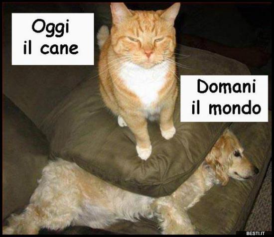 Vignette Divertenti Cani E Gatti