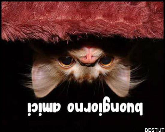 Buongiorno Amici Bestiit Immagini Divertenti Foto Barzellette