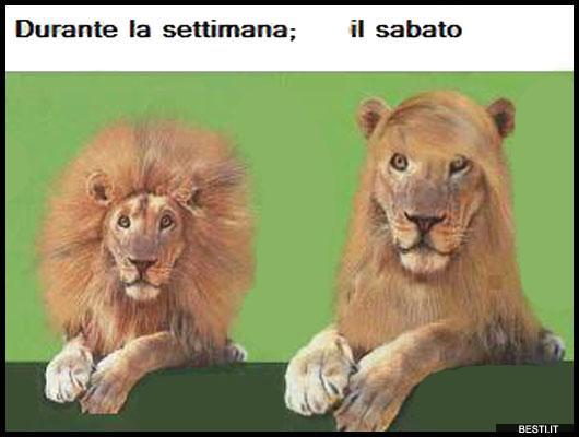 Il Sabato Besti It Immagini Divertenti Foto