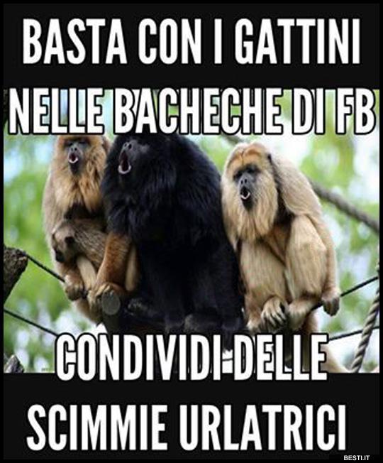 Basta Con I Gattini Bestiit Immagini Divertenti Foto