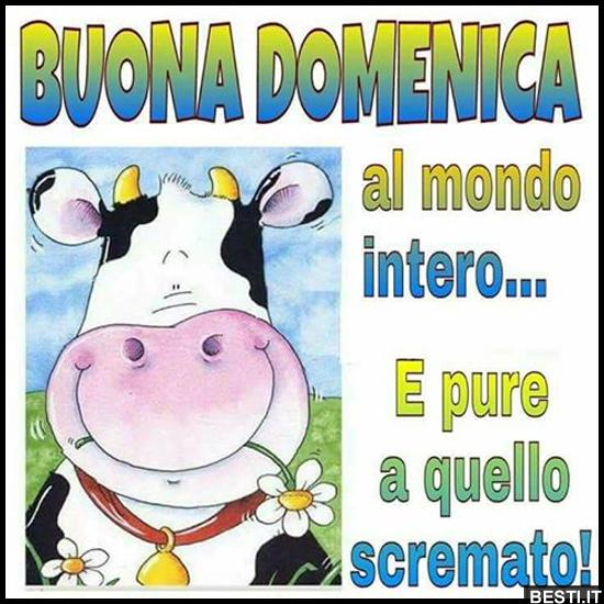 Conosciuto Buona Domenica | BESTI.it - immagini divertenti, foto, barzellette  NB43